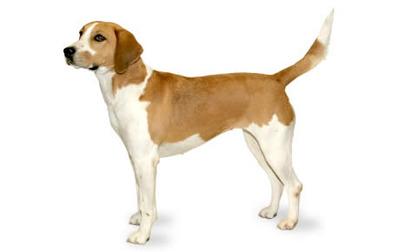 Dog breed info wooftalk