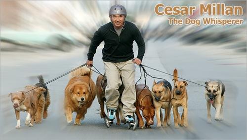 Cesar Millan 1